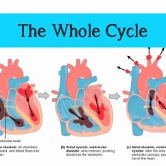 Heart Diagram Nodes Electrical Panel Board Wiring Pdf The Mammalian & Cardiac Cycle - Youtube
