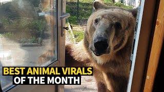 Top Viral Animal - May 2019