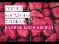 Секрет Богатого Урожая. Выращивание Клубники. Клубника Весной. (13.05.17)