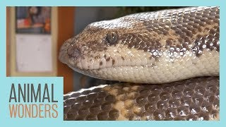 The Difference Between Legless Lizards and Snakes