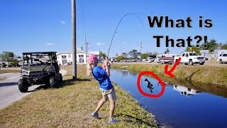 11 Year Old Catches a GIANT Bass and a Super WEIRD Fish
