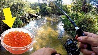 Fishing a TINY Creek w/ NASTY Bait!!!