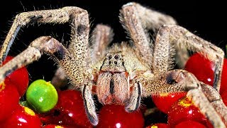 9 Spiders That Will Make You Scream