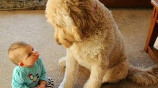 FUN CHALLENGE: Try NOT to laugh - Funny & cute dogs and kids