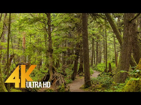Virtual Hike along Iverson Railroad and Northwest Timber Trails - 4K Forest Walk with Birds Song