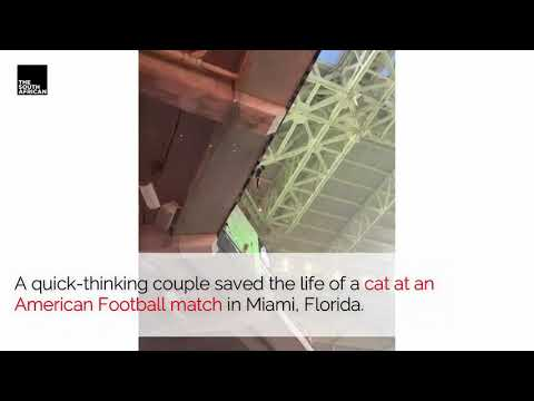 Cat saved! Hope in humanity restored.