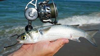 Fish CANNOT Resist This Bait... Mullet Run 2018