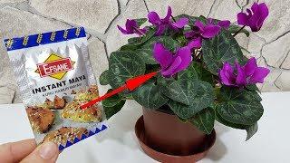İnsanı Delirtecek Gerçekten İşe Yarayan, Çiçek Coşturan Kuru Maya Tarifi
