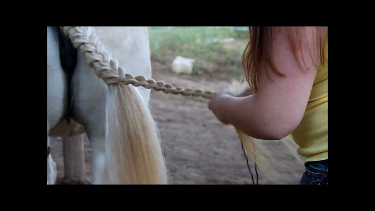 HowTo Braid Manes and Tails for Horse Shows  YouTube
