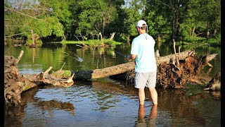 Topwater Frog Fishing in EXTREMELY Shallow Water!