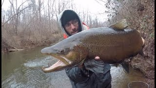 Fishing Small Creeks for The Biggest Trout Ive Ever Seen!!