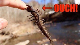 VICIOUS Alien Bug Catches Fish?!?! (Winter River Fishing SECRET)