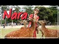 Nara Travel Guide | Bowing Deer + Japanese Street Food Tour