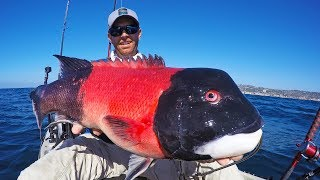 Kayak Fishing for California Sheephead | #FieldTrips Ep 3
