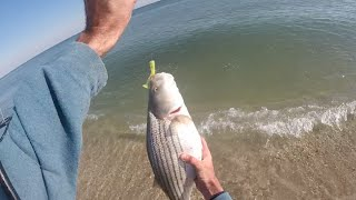 New Jersey Surf Fishing Striped Bass and Bluefish ″Epic Blitz″ December 4, 2015