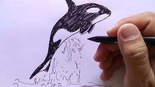 Gambar Buku Mewarnai Gambar Anak Clip Art Lucu Ikan Paus Unduh
