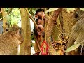 Wow!Wow! Adorable baby Maddix can climb up tree,look so strong,