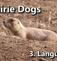 prairie dog burrow diagram prairie dog map prairie dog tunnel diagram [ 1280 x 720 Pixel ]