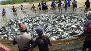 LONG LINE FISHING
