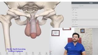 Penis büyütme ve kalınlaştırma yöntemleri