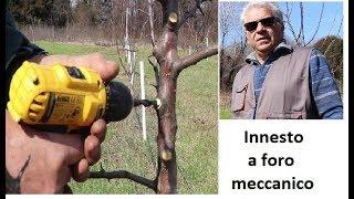 Innesto a foro meccanico