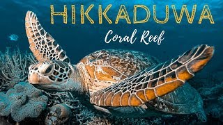 Hikkaduwa CORAL REEF - Best BEACHES and SNORKELING in SRI LANKA