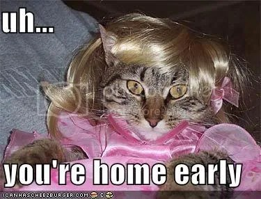 funny-pictures-cat-wig-dress-home-e.jpg image by blckroziz