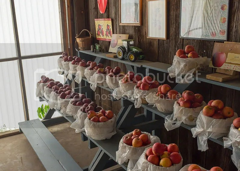 Apples For Sale, Grassy Ridge