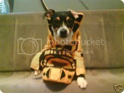 master chief dog costume