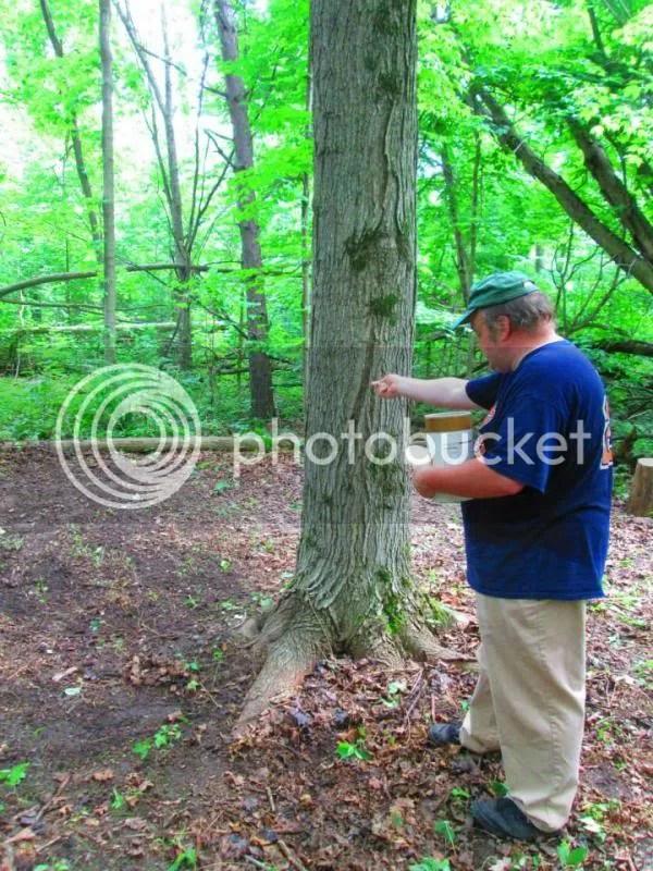 photo tree_zps59961c27.jpg