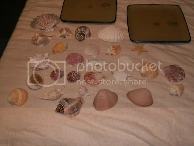 Seashells and plates