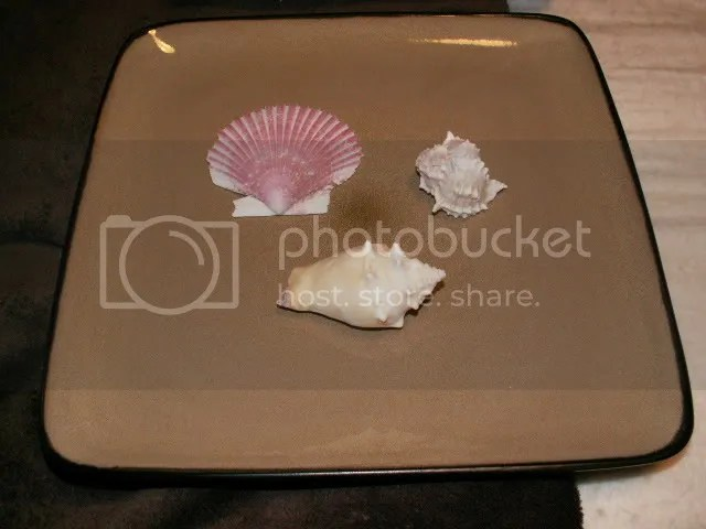 First Seashell plate collage