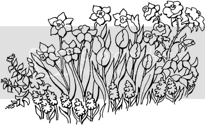 Flowers Coloring Page Photo by printablecoloringpages