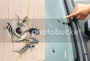 Misteri Hujan katak di jepang, Hujan Ikan di jepang