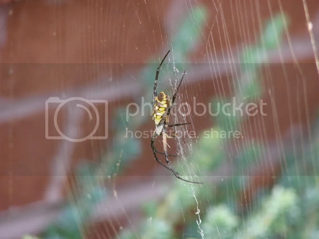 3/4 Side View in Web