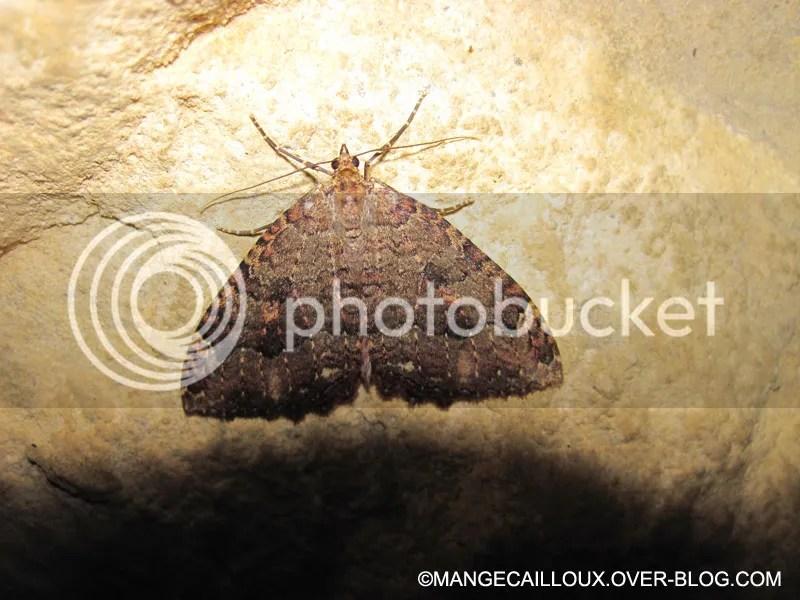 grotte-de-l-ours-4355.jpg