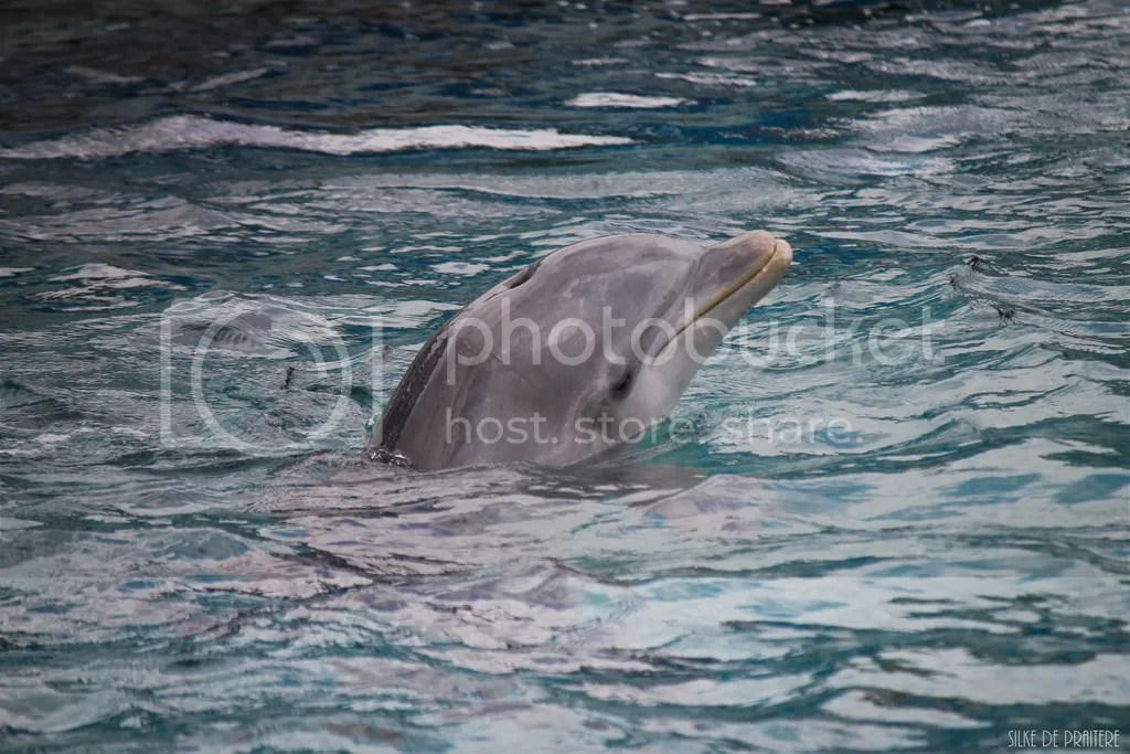 Sea Aquarium Curaçao