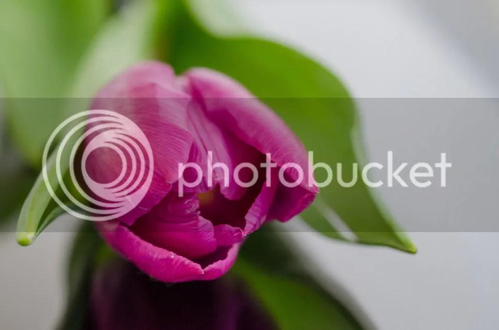 photo nature-purple-garden-flower_zpsyy7irjua.jpg