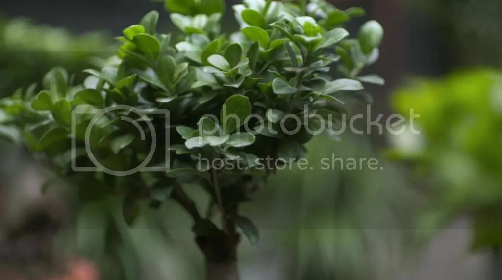 photo 2302-57-59_zps59e23aa8.jpg