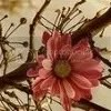 pink vintage flower Pictures, Images and Photos
