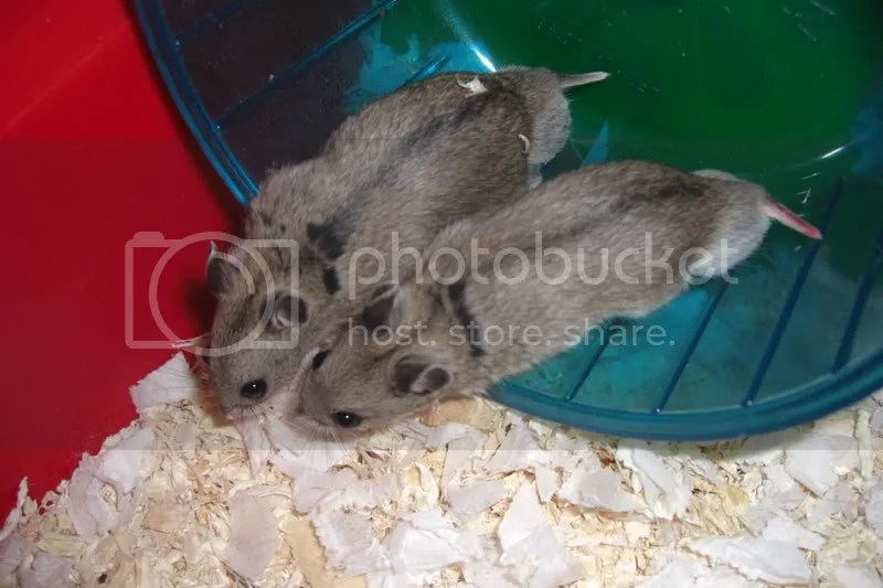 Im not joking - I took our first hamsters back twice because I couldnt accept that their arses could be this freaking huge