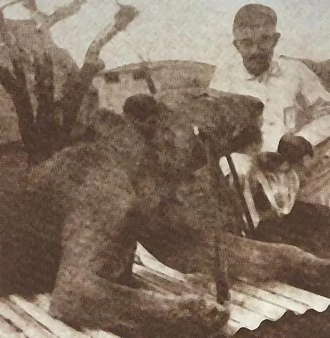 THE MANEATING LIONS OF TSAVO REASSESSMENTS AND OTHER MANEATING LIONS TO THE PRESENT  PART 2