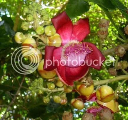 Blossom & Buds