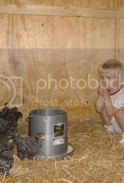 Beth playing with the chicks.