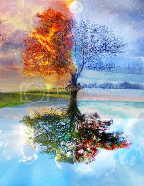 mirroredtrees.jpg To everything there is a season and a time to every purpose under Heaven image by silkscribe