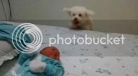 Pitbull adoption az, dog jumping on bed with baby