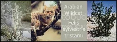 The Arabian Wildcat and its environment.