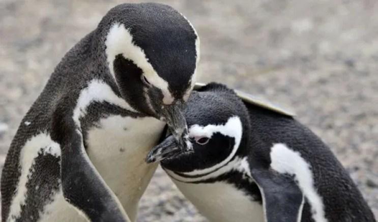 Meet penguins at devonshire square