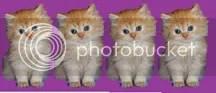 4 Kitty Stars!!!