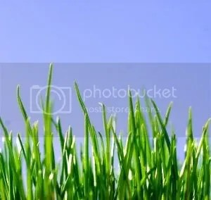grass Pictures, Images and Photos